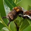 lorquins admiral caterpillar 6-12-09