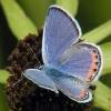acmon blue 8/26/03