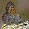 mariposa copper 8-4-12