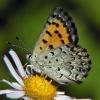 mariposa copper 7-24-03