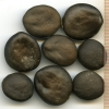 Marah oreganus seeds