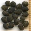 Hosackia crassifolia seeds
