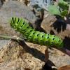 caterpillar 7-28-10