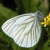 margined white 6-1-04
