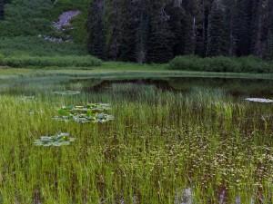 pond west of Blair Lake