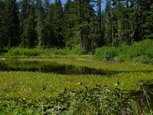 Southwestern hidden lake at Bristow Prairie