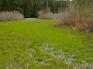 Lone Wolf Meadow