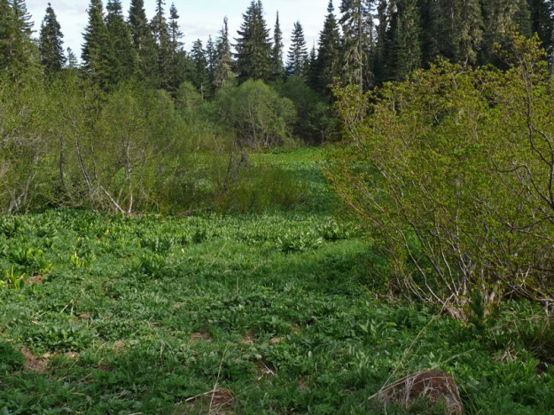The lowest meadow on the south side of Patterson is green and lush in spring.