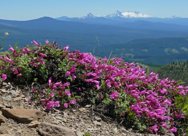A number of beautiful cliff penstemon (Penstemon rupicola) were blooming along the ridge. The Three Sisters can be seen in the background to the southeast.