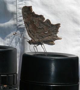 Binoculars are very handy for watching butterflies!
