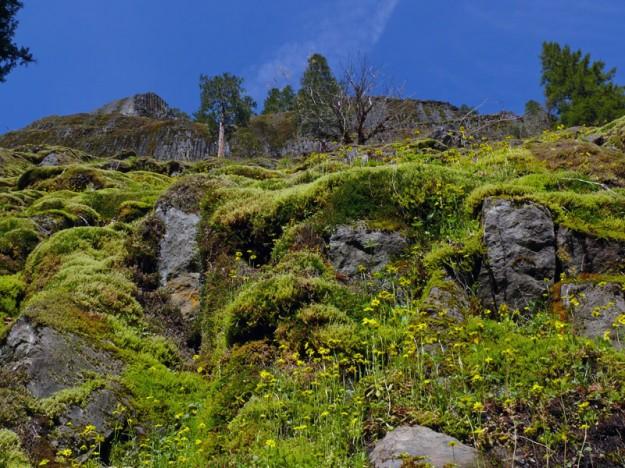 Gold stars decorating the mossy rocks on the steep slope below Buffalo Peak.