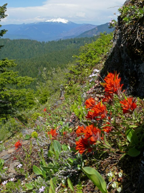 Cliff paintbrush (Castilleja rupicola on the north side of the rock. To the east, Diamond Peak is about the only mountain with any snow left.