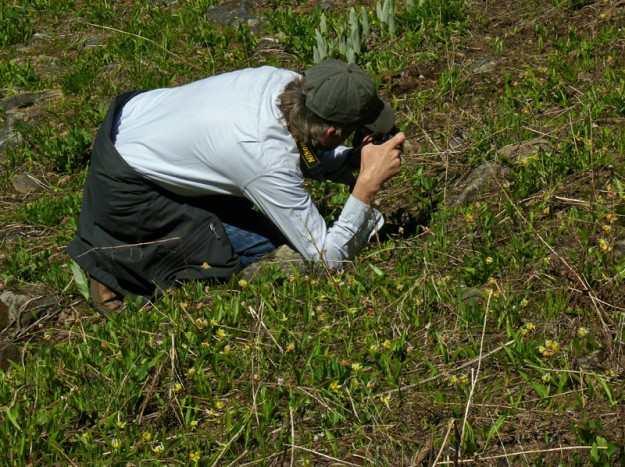 Ed among the Klamath fawn lilies (Erythronium klamathense)