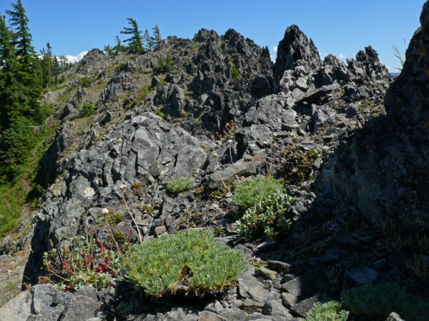Fuzzy little cushions of cutleaf daisy (Erigeron compositus) seemed to run in a line across the top of the ridge.