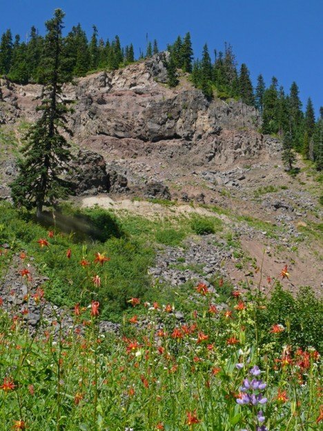 Columbines (Aquilegia formosa) decorate the base of the large cliff and talus slope area at the terminus of Road 5884.
