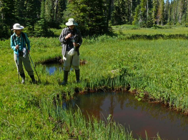 Sabine and John inspecting some of the many small pools of water in the wetland south of Lopez Lake.
