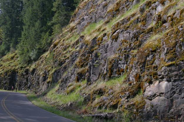 The massive amount of damp, exposed rock along Cougar Reservoir supports many seep-loving species, including California mistmaiden.