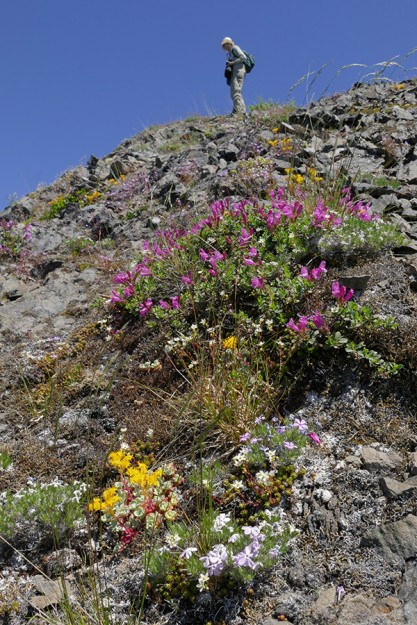 Doramay on top of Pyramid Rock, admiring a colorful display of flowers below
