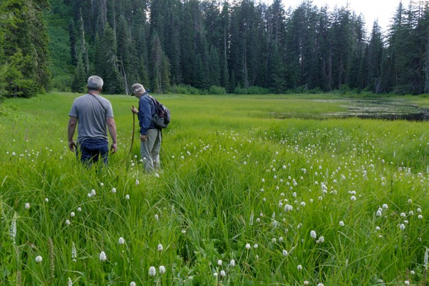 Peter and John at the shallow lake admiring the abundant bistort (Bistorta bistortoides), bog orchids, and elephant's head (Pedicularis groenlandica).