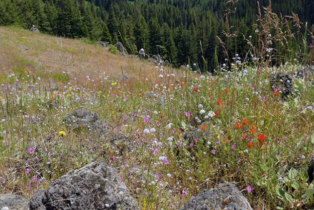 flowery rock garden