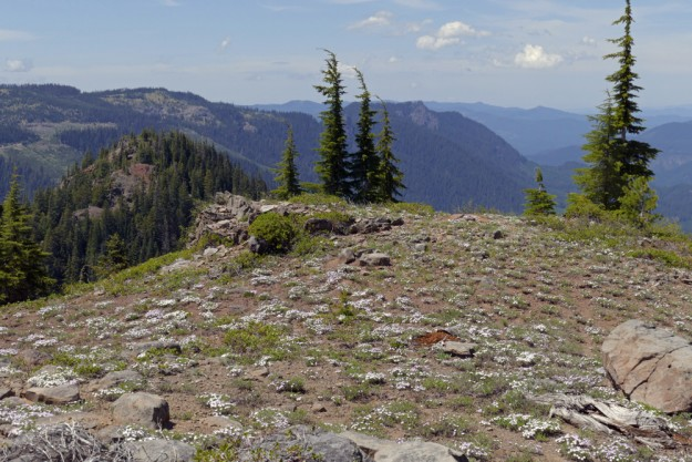 Looking north toward Dome Rock from the phlox-covered plateau.