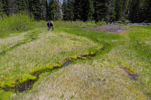 John photographing sundews in the wetland east of Loletta Lakes.