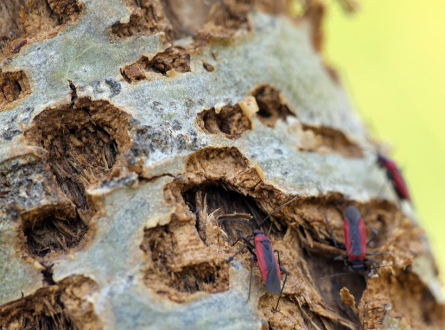 Did these bugs cause all this damage to the aspen bark? No wonder many of the trees didn't look so healthy.