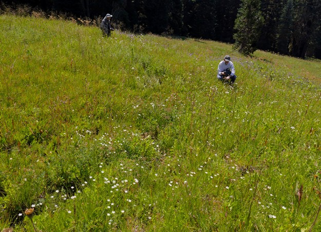 John and Ed among the Parnassia cirrata in the wet area of Aspen Meadow