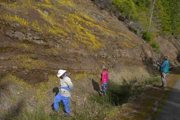 Sabine, Nancy, and Ginny enjoying the masses of gold stars (Crocidium multicaule) along Hills Creek Reservoir