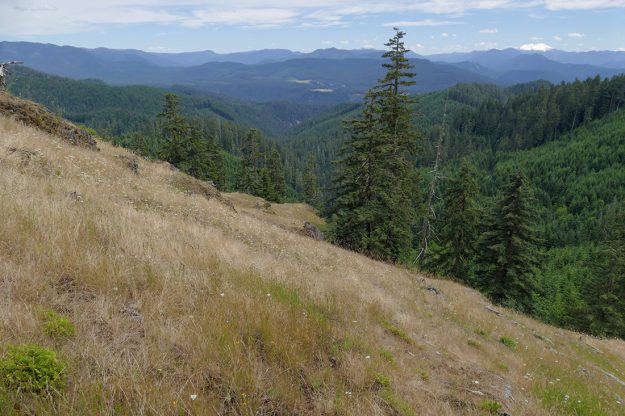 There's a great view of the mountains beyond Oakridge, including Diamond Peak on the right and Fuji Mountain on the left, both still snowy. You can also make out the two west-facing meadows of Heckletooth Mountain.