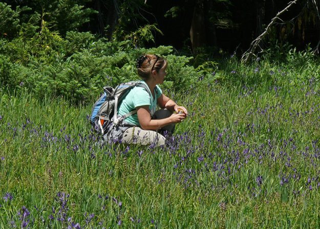 Cheron admiring the lovely purple sweep of great camas (Camassia leichtlinii) at Bradley Lake.