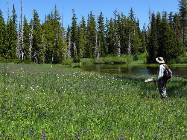 Joe Doerr among a sweep of great camas (Camassia leichtlinii) by the edge of Bradley Lake. The white pompons are bistort.