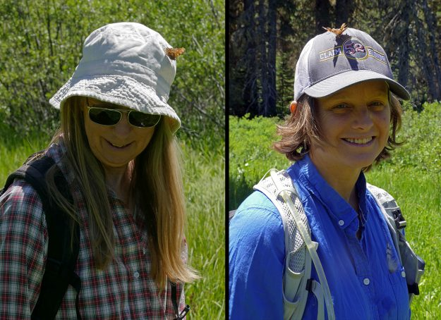 The latest style in hiking hats? In one spot in the wetland, we came across a number of green commas, or perhaps I should say they came upon us. They seemed to think that we were quite tasty and repeatedly landed on our hats and other clothing.