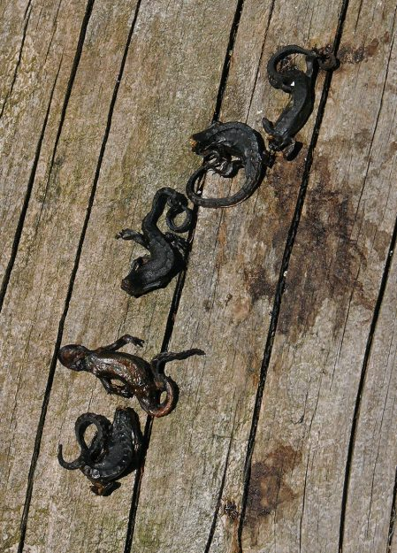Warning! Gruesome sight not for faint of heart! Dried up headless newts left by some scary monster.