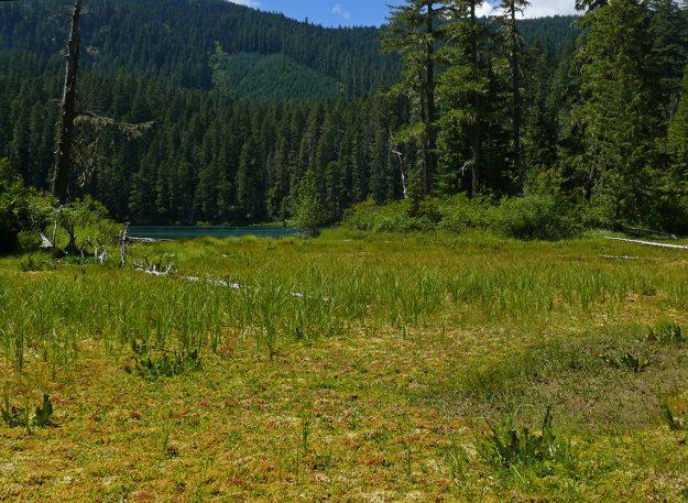 The sphagnum bog alongside Hidden Lake