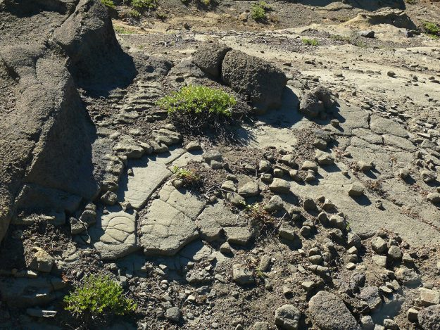 The rocks here are in thin layers that break off in soft-edged chunks.