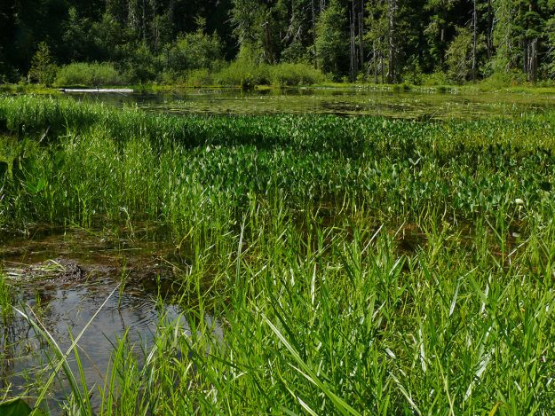 The first hidden lake was also filled with threeway sedge.
